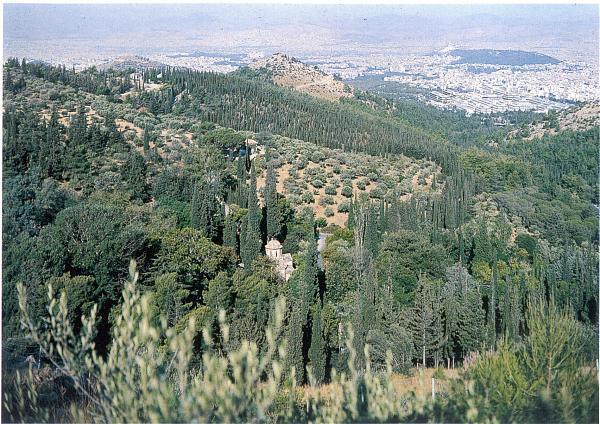 Αισθητικό δάσος υμηττού (καισαριανής