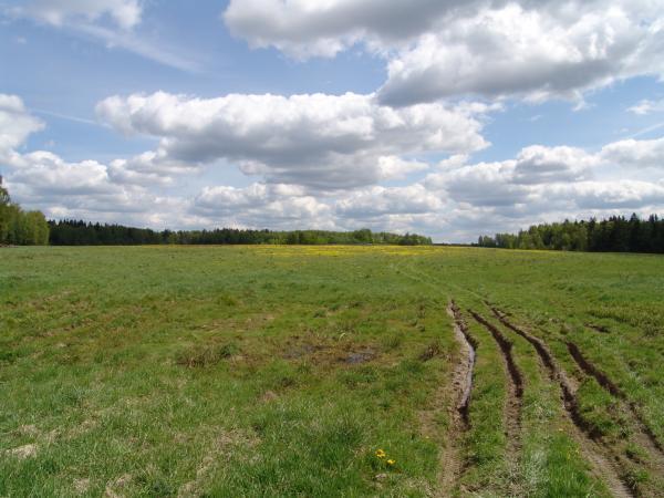 поле возле деревни Чудцево