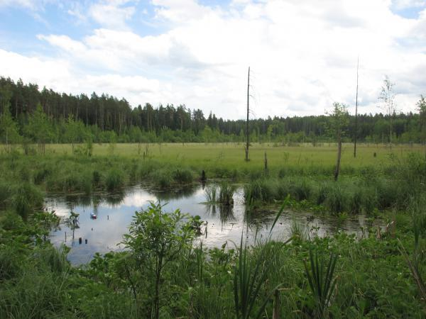 Голубое озеро воря богородское - f4572