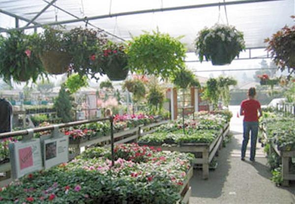 Plant Depot