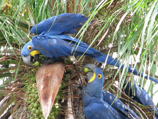 Zoomars Petting Zoo Bird Park San Juan Capistrano California