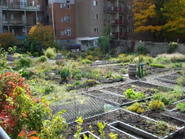 Jardin communautaire des franciscains qu bec for Jardin quebec