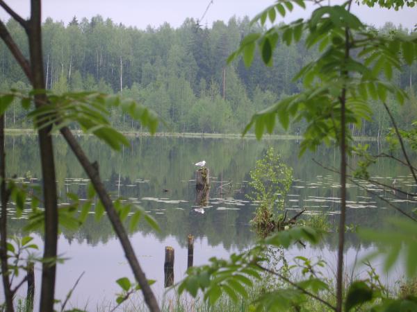 рыбалка на озере круглое всеволожск