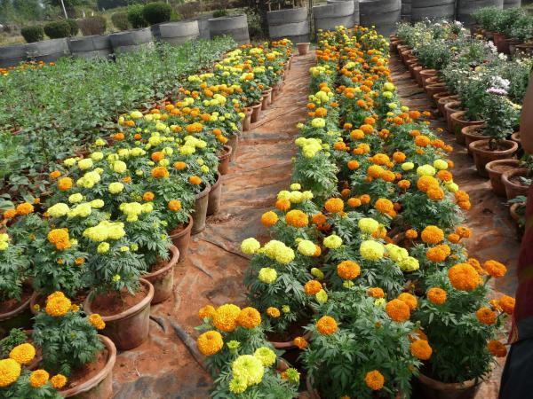 How To Make Money From Flower Gardening Business In Nigeria