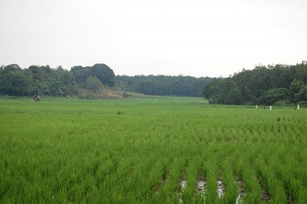 Padang Sidempuan Indonesia  City new picture : Indonesia / Sumatera Utara / Padang Sidempuan / Indonesia / Riau