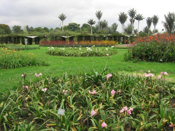 Jard n bot nico jos celestino mutis bogot bogot for Jardin botanico bogota