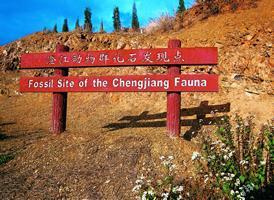 chengjiang fossil lagerstatte geopark yunnan geology
