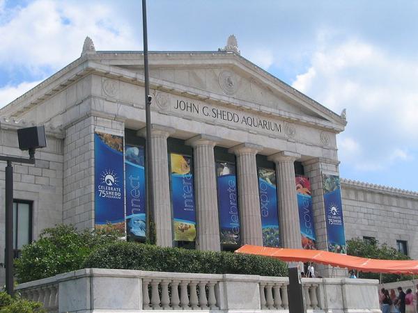 The Shedd Aquarium Chicago Illinois Museum Public