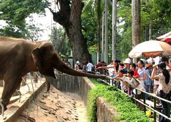 サイゴン動植物園 - ホーチミン...