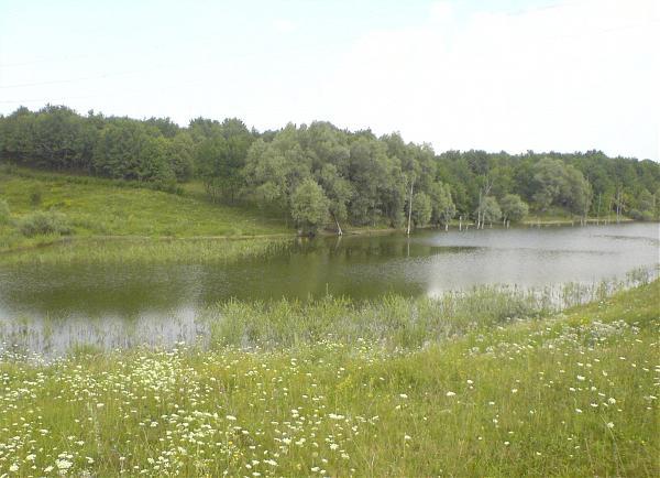 ставок толстолоб кировоградская область