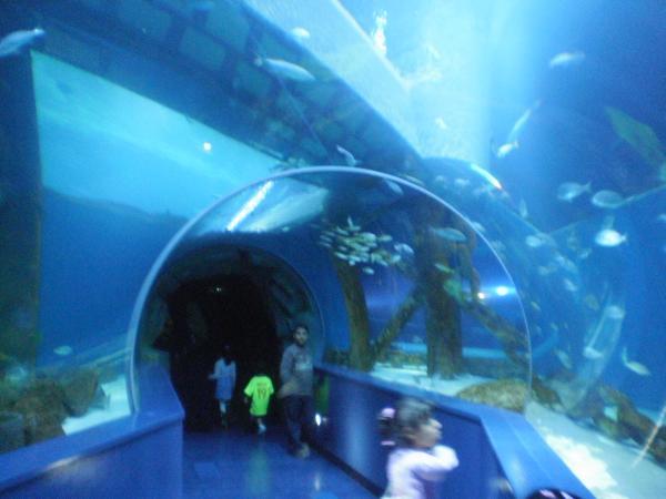 Sharjah Aquarium Sharjah