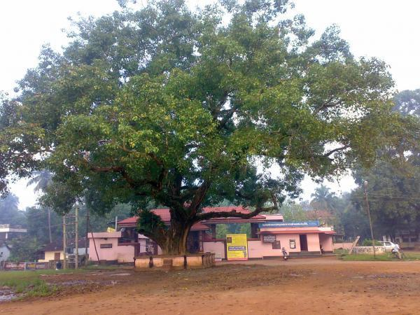 Image result for chembuthara pooram