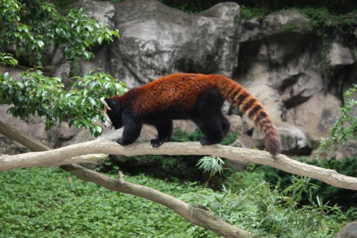 Tama Zoo - Hino
