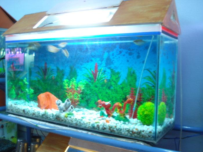 Heera moti fish aquarium nanded for Large aquarium fish