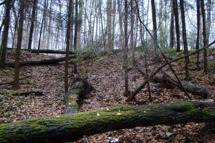 московские леса: