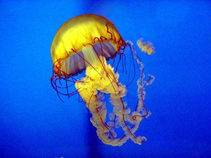 museum , public aquarium / oceanarium / seaquarium