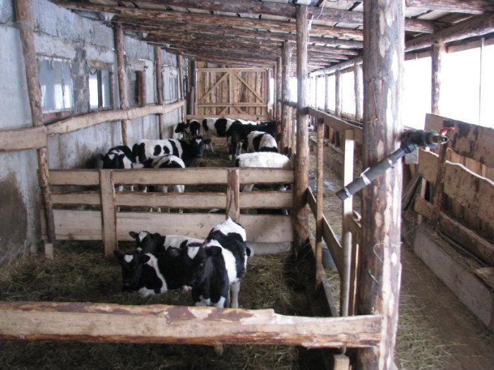 Загон для быков своими руками