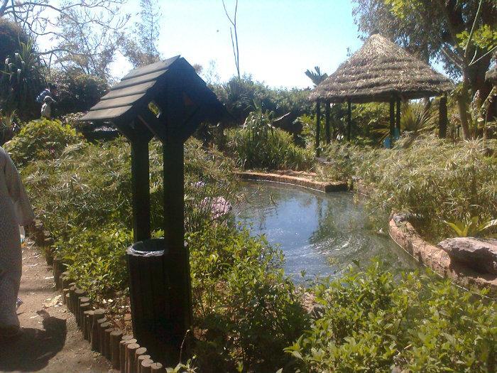 Les jardins exotiques sal - Jardin exotique sale nice ...