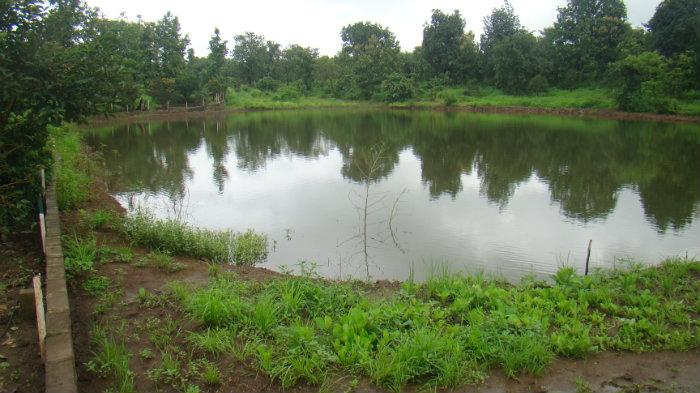ravi pereira 39 s fish pond