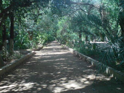 jardin 5 juillet biskra arbre