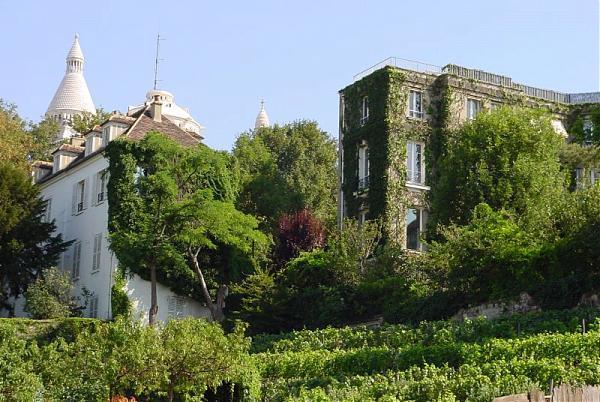 Les vignes de montmartre paris - Les jardins de montmartre ...