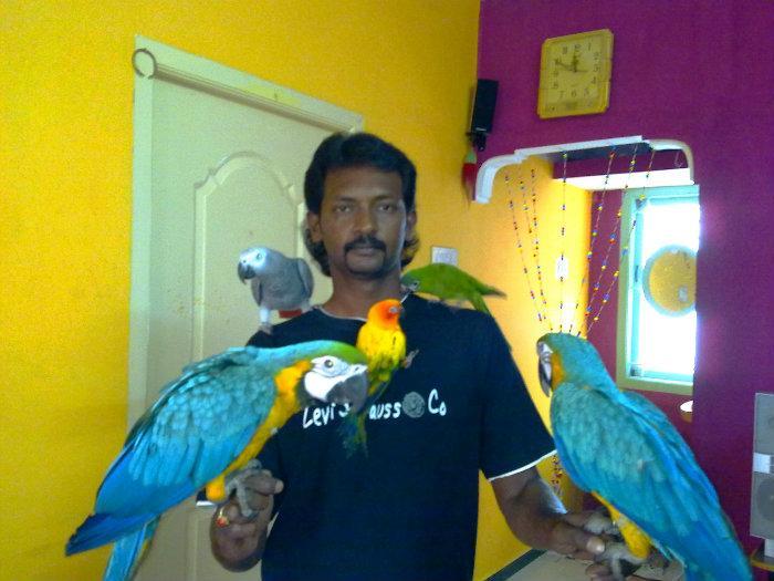 Preethi Farms Exotic Birds Amp Dog Breeders Coimbatore