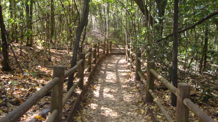 Resultado de imagem para floresta nacional de brasilia