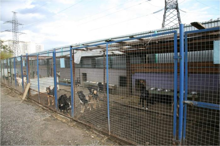 Приюты и гостиницы для животных в Ступино - адреса
