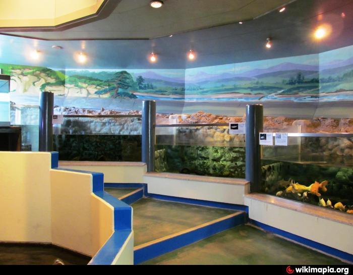 Ayu Freshwater Fish Museum Public Aquarium Oceanarium