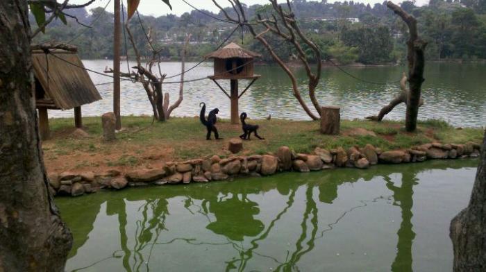 Resultado de imagem para parque zoologico de são paulo