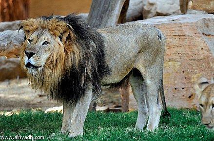 حديقة الحيوانات بمدينة الرياض الرياض