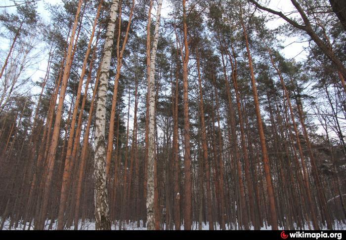 можно ли гулять в салтыковском лесопарке