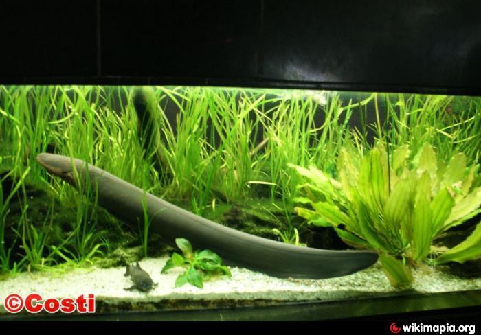 Aquarium Als Terrarium Verwenden : Aquarium terrarium leipzig