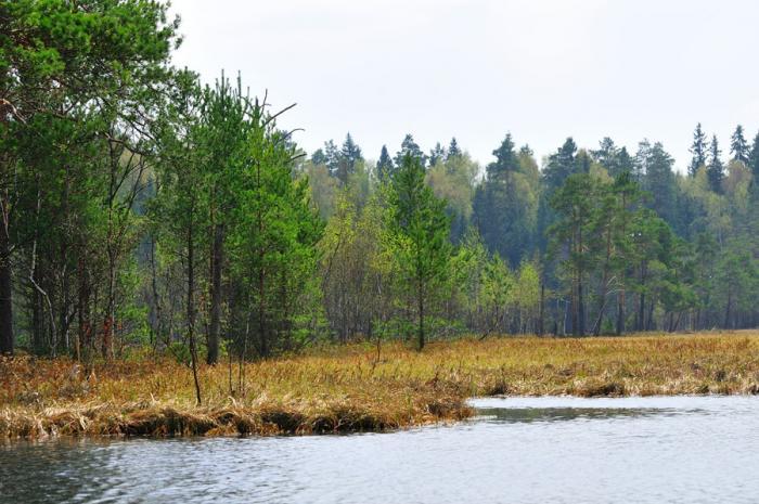 озеро большое коровино рыбалка