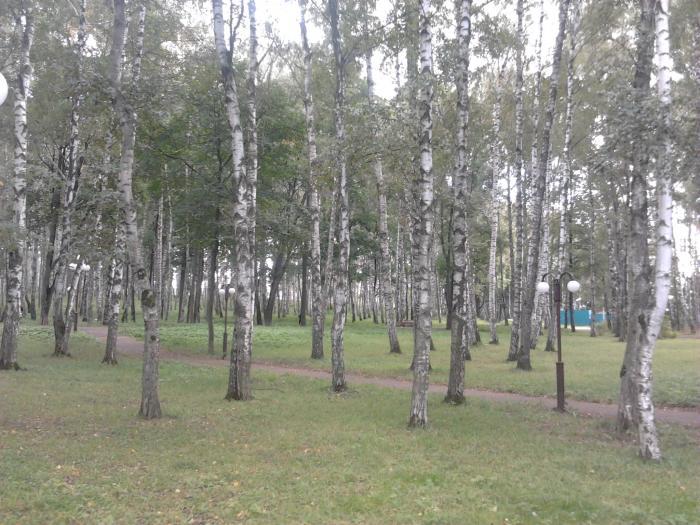 Парк отдыха берёзовая роща дмитров