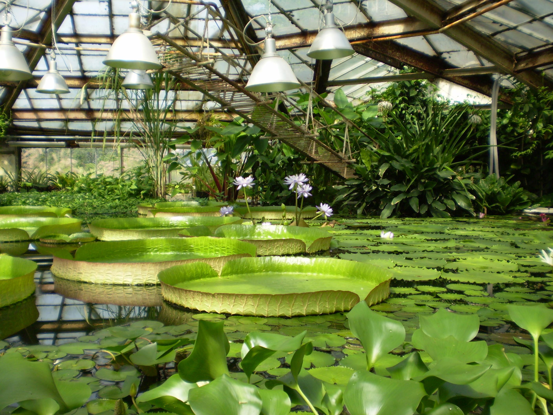 Saint Petersburg Botanical Garden Saint Petersburg