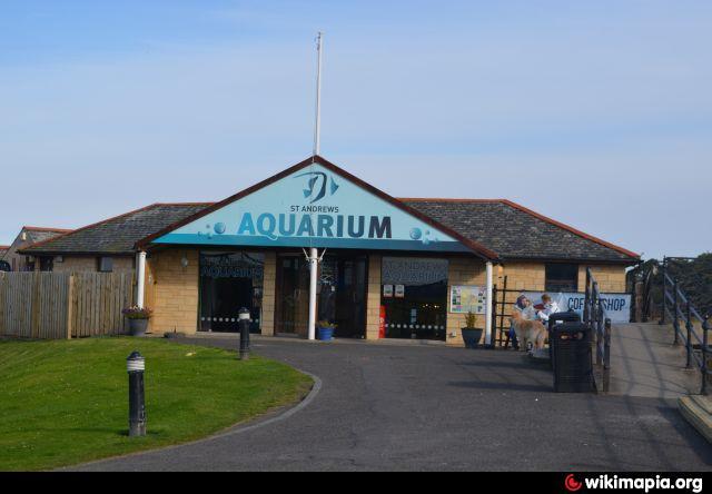 St Andrews Aquarium - St Andrews