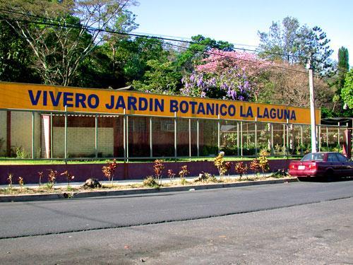 Jardin botanico la laguna antiguo cuscatl n for Vivero el jardin