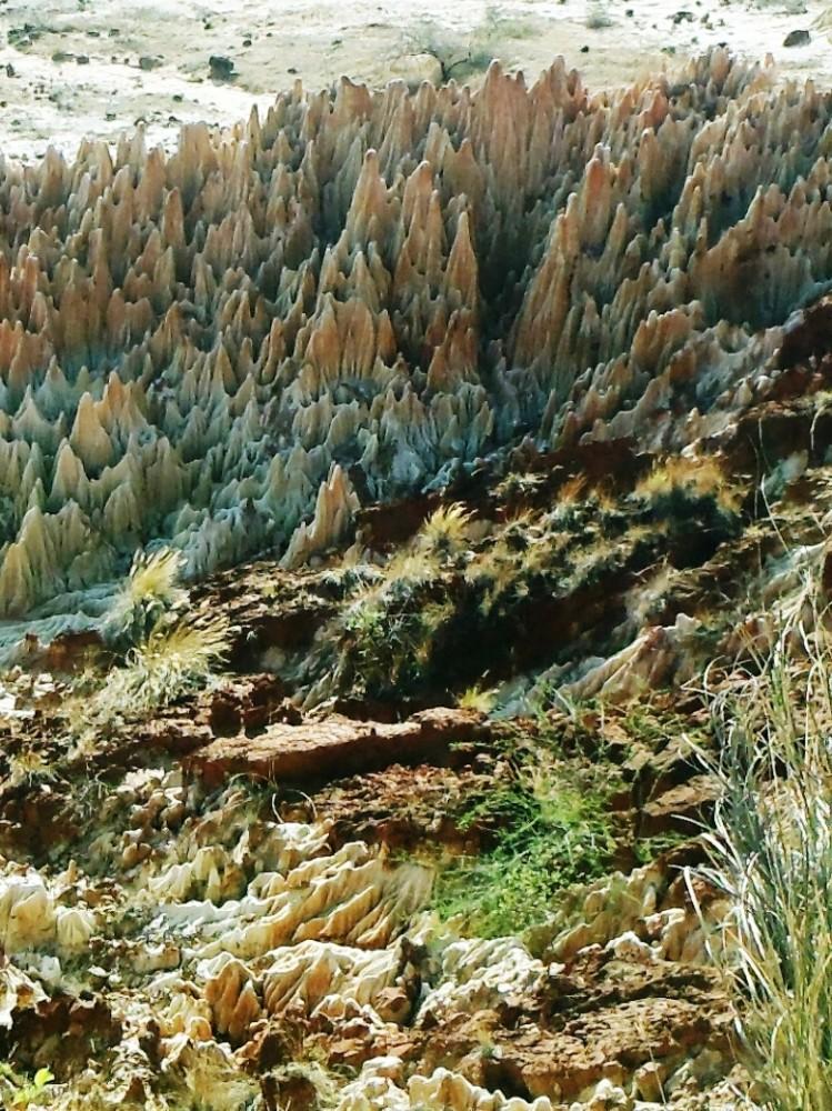 ツィンギ・デ・ベマラ厳正自然保護区の画像 p1_36