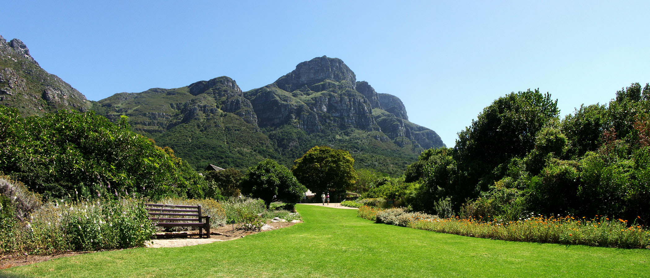 Kirstenbosch National Botanical Gardens Cape Town Park Forest