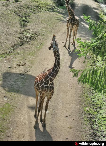 kolmårdens djurpark kontakt