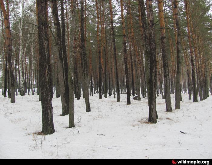Парк , ліс , не відображати назву