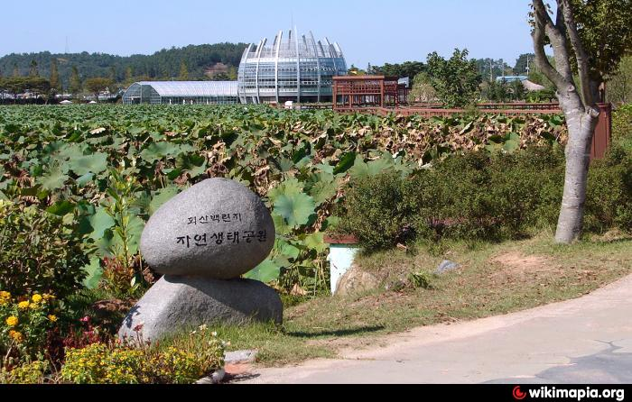 Muan-gun South Korea  city photos : Hoesan White Lotus Pond 회산 백련지