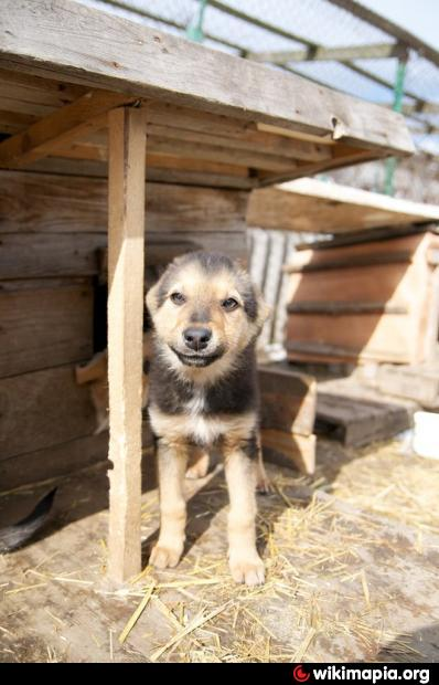 Приют для животных гостомель