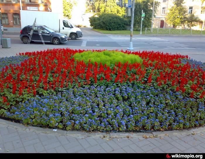 Название и фото цветы для городских клумб