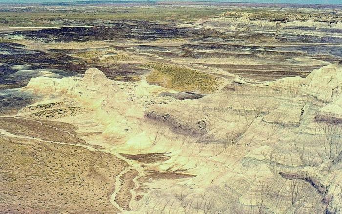 Greasewood arizona