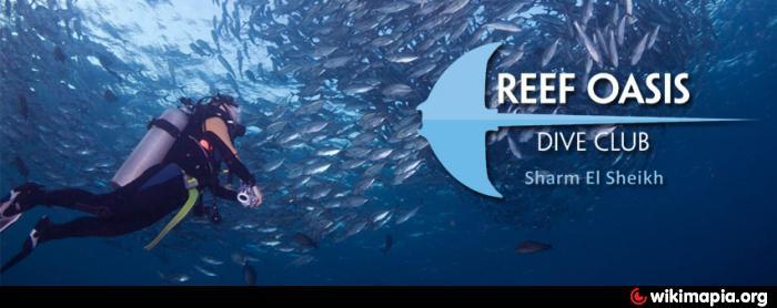 Reef oasis dive club filiale in reef oasis blue bay spa - Reef oasis dive club ...