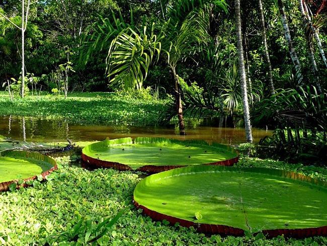 Resultado de imagem para parque da amazonia