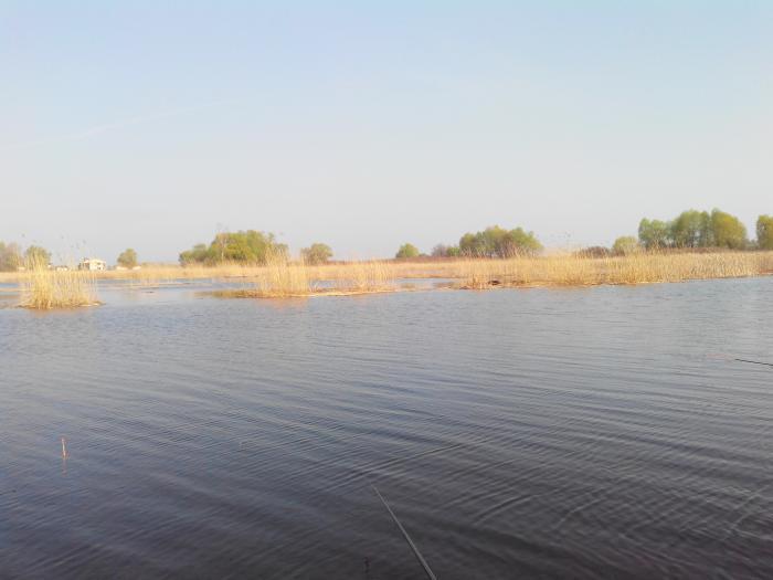 рыболовная база тихая гавань