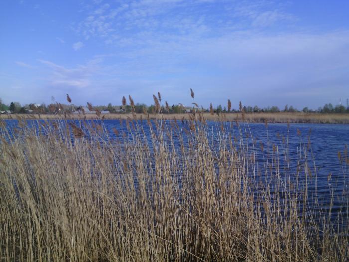 озеро моховое московская область рыбалка